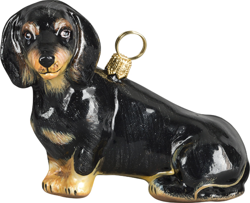 Dachshund Sitting Black