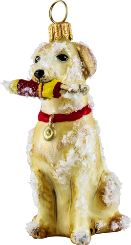 Snowy Yellow Labrador Retriever with Bouy